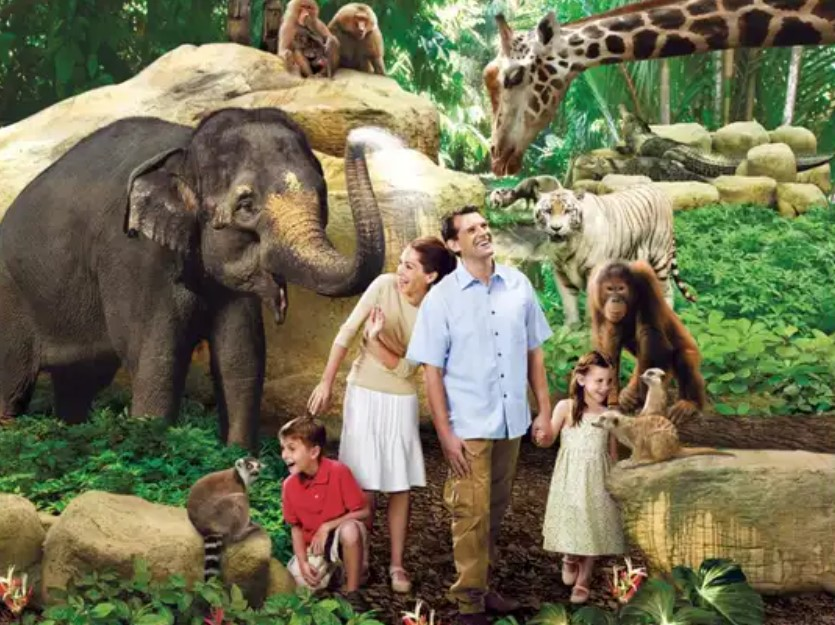 Visiting Singapore Zoo? Here Are The Tips For You!